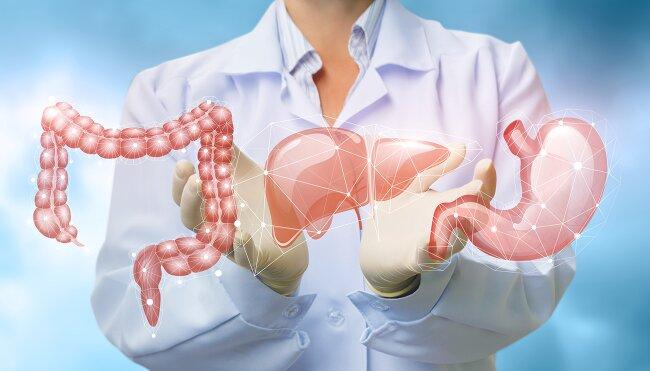 żołądek wątroba jelita